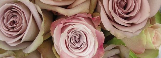 Купить саженцы роз недорого